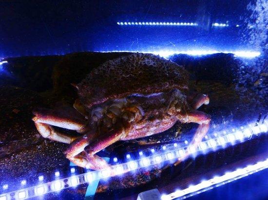 Meson Restaurante La Fresquera : Färska skaldjur tillagas