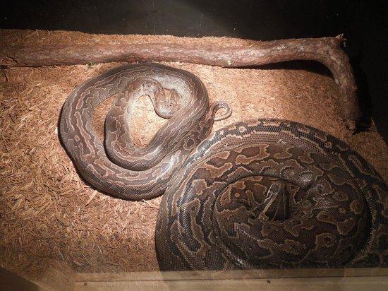 Nova Scotia Museum of Natural History: Pythons