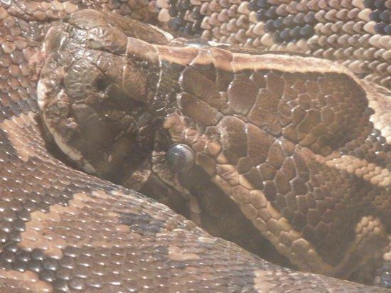 Nova Scotia Museum of Natural History: python