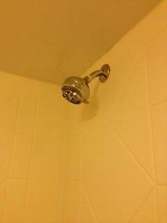 Homewood Suites by Hilton Jacksonville-South/St. Johns Ctr.: showerhead