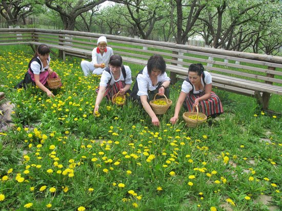 Hilde's Residence: Our girls are picking up dandelion flowers in the Orchard