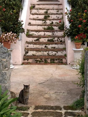 Granaway Guest House & Cottages: kitty!