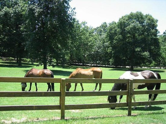 Town & Country Inn Bed, Breakfast and Stables: We offer stabling for our guests' horses