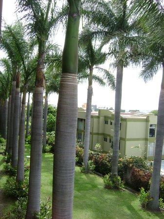 Best Western Irazu Hotel & Casino: Parque trasero desde una habitación