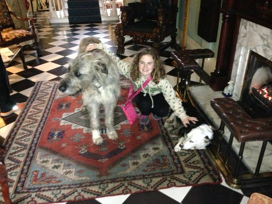 Ballyseede Castle: The house dogs (Mr Higgins and Einstein)