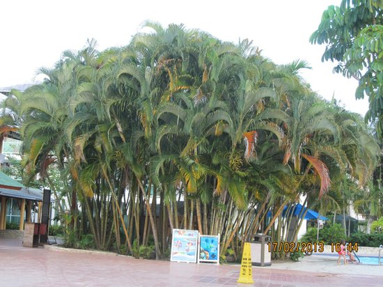 Grand Paradise Playa Dorada: devant le buffet