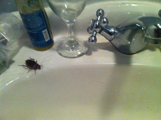 Tupa Hotel: Roaches in the bathroom