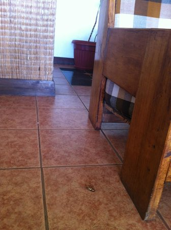 Tupa Hotel: Roaches in the common areas