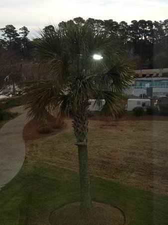 Fairfield Inn Myrtle Beach Broadway at the Beach : my view