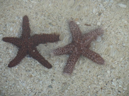 Coral Harbour Beach House and Villas: Lots of starfish on the beach