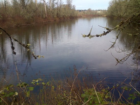 Minto-Brown Island Park: Willamette River flowing by the park