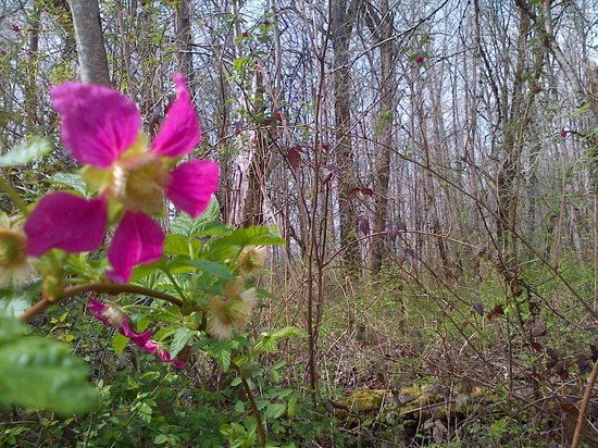 Minto-Brown Island Park: wildflowers starting to grow in the Springtime..