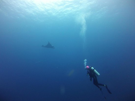 Khao Lak, Thaïlande : Manta sighting!