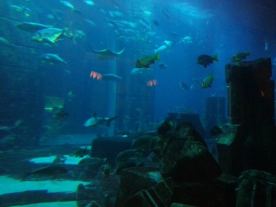 Atlantis, The Palm: The aquarium in the main building