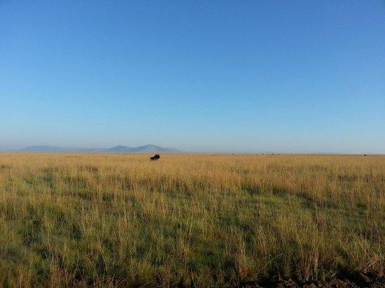Lions Valley Lodge: Endless plains