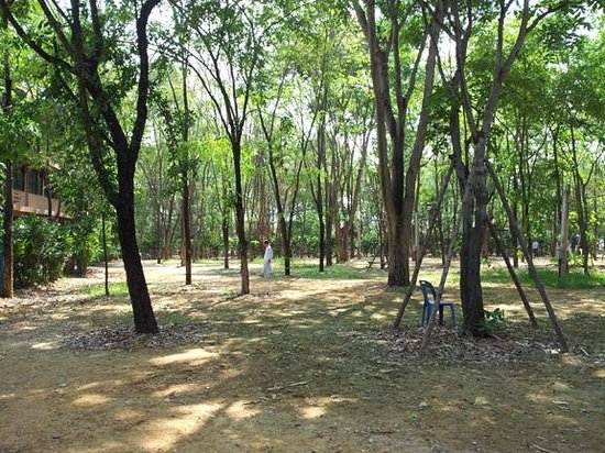 Wat Maheyong : part of the meditation forest