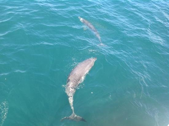 Jervis Bay Wild Cruises: our friends for the day!