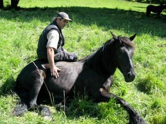 Haras Picard du Sant: Jean-Louis med en av sina merénshästar