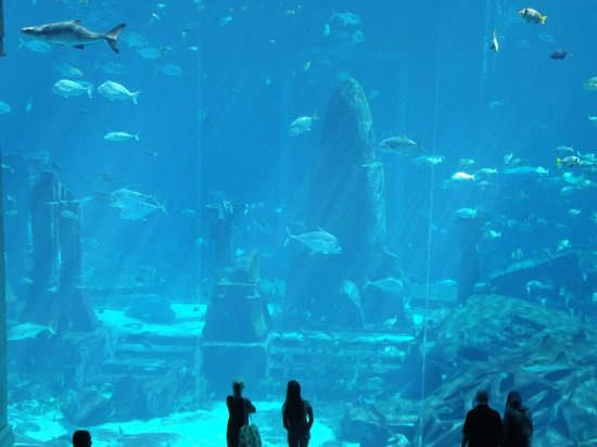 Atlantis, The Palm: The Aquarium