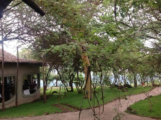 Lake Manyara Serena Lodge: Lodge grounds