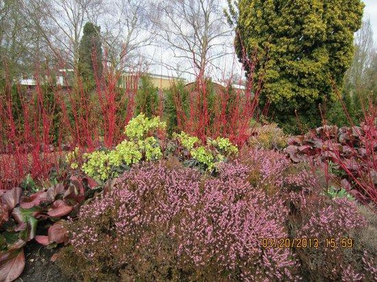 Cambridge University Botanic Garden: The Winter Garden