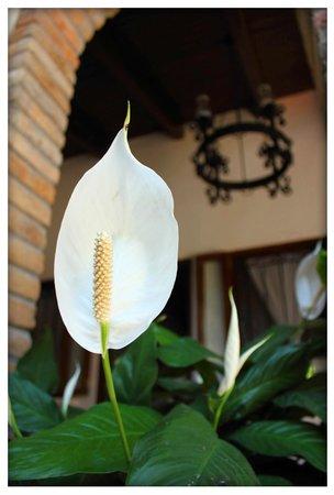 Hacienda la Esperanza: Flowers