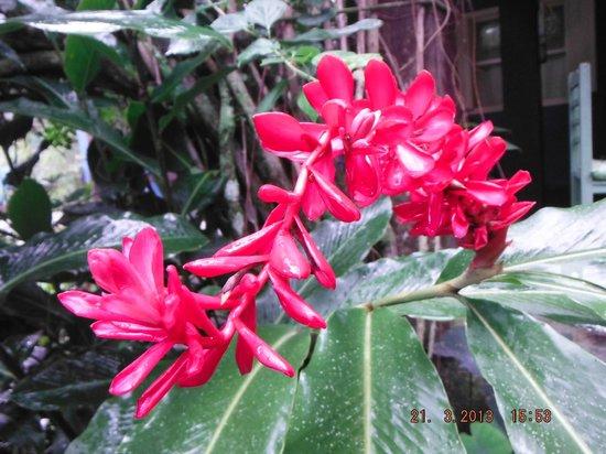 Pousada Recanto das Estrelas: Jardim
