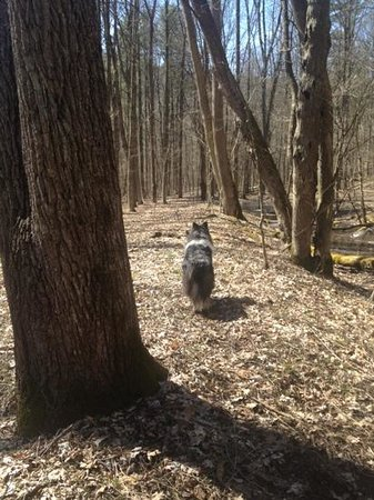 Mohican State Park: on the trail