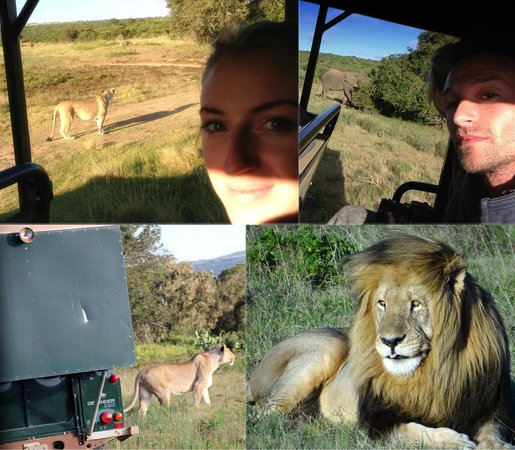 Schotia Safaris Private Game Reserve: Best of