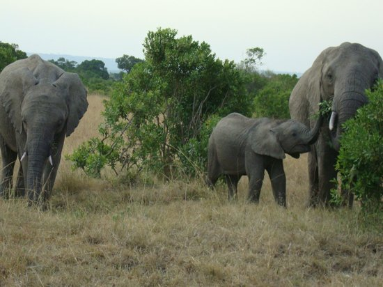 Fairmont Mara Safari Club: Mum and her two Children feeding & strolling.