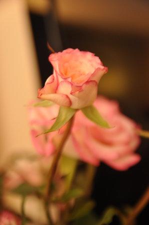 Hanoi 3B Hotel: fresh flower in the room...:)