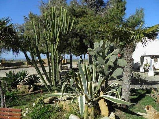 Tenuta Stoccatello : Im Garten
