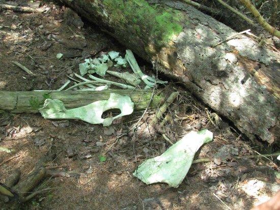 Greenstone Ridge Trail: Moose Bones on the Greenstone