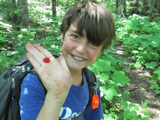 Thimbleberries on the Greenstone Ridge Trail