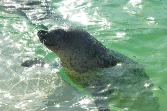 Hotel De Pelikaan Texel : ecomare zeehonden opvang