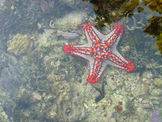 Garoda Resort: Bellezze marine