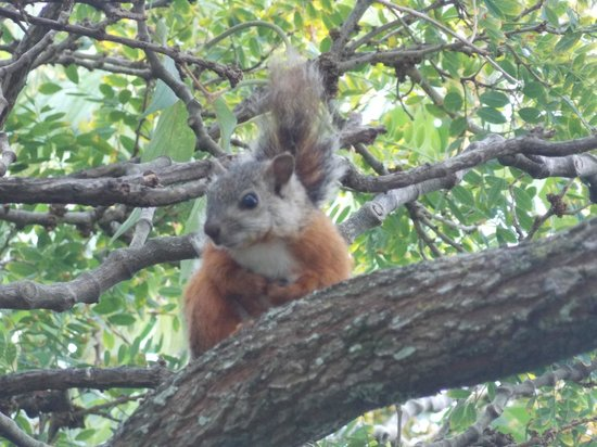 National Museum (Museo Nacional): A squirrel in the trees in the center of the museum