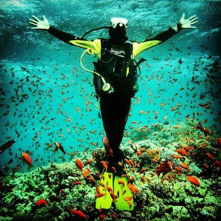 Piscis Diving : disfrutando del agua cristalina
