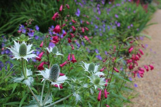 Cambridge University Botanic Garden: Flores