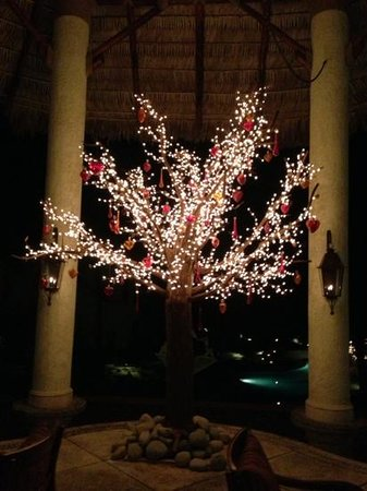 Las Ventanas al Paraiso, A Rosewood Resort: beautiful tree at entry to Las Ventanas