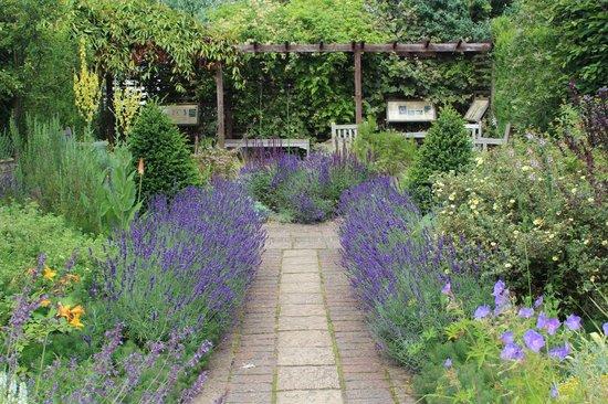 Cambridge University Botanic Garden: Caminho de Lavanda...