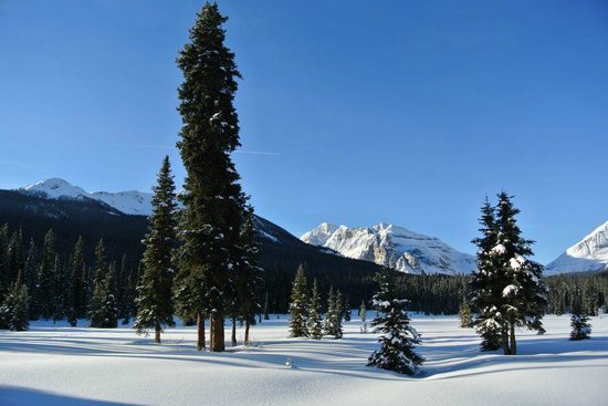 Shadow Lake Lodge: The view