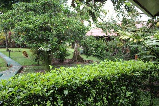 Coco Loco Lodge: El jardín
