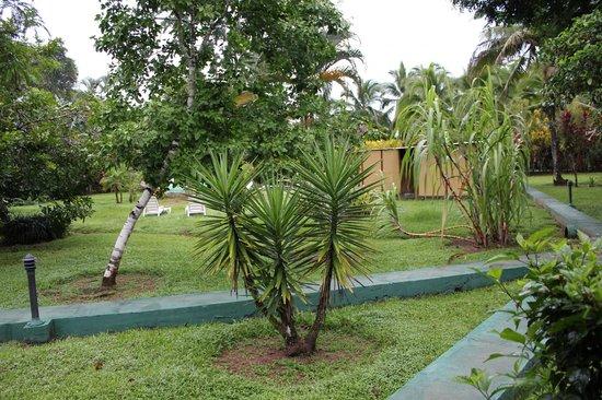 Coco Loco Lodge: E,l jardin!