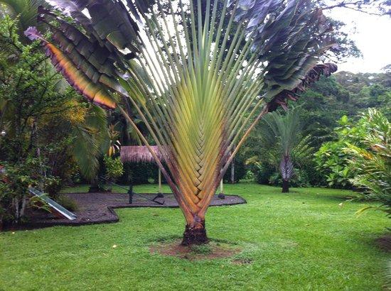 Coco Loco Lodge: las plantas