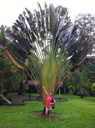 Coco Loco Lodge: Las plantas tan bonitas