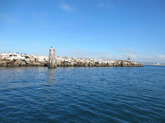 Fast Raft Marine Eco Tours