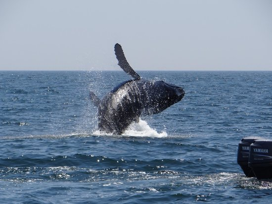 Secrets Huatulco Resort & Spa : Unexepected Whale Sighting