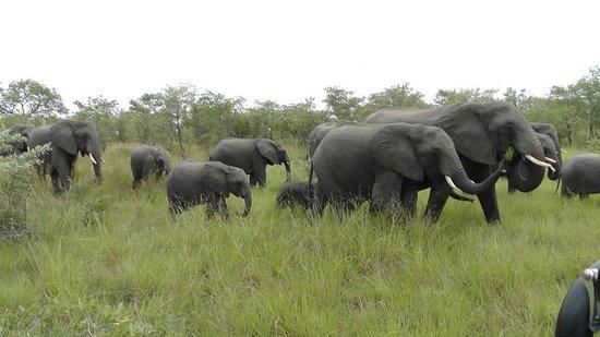 Sabi Sabi Little Bush Camp: Herd of elephants--amazing