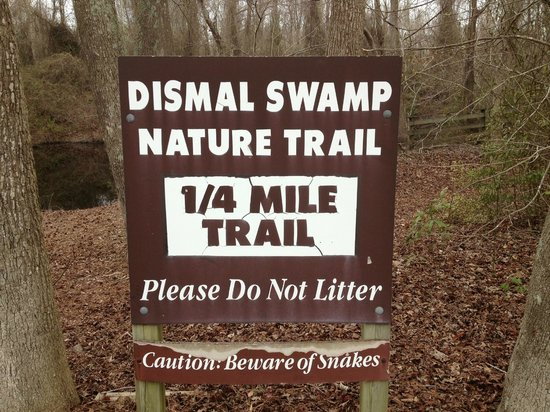 Dismal Swamp State Park : Nature Trail